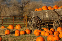 pumpkins in a wagon