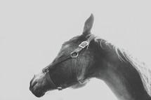 a horse in reins