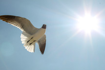 A seagull flying in a blue sky.