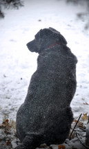 Black dog outside in a snowstorm.