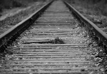railroad tracks fading in the distance.