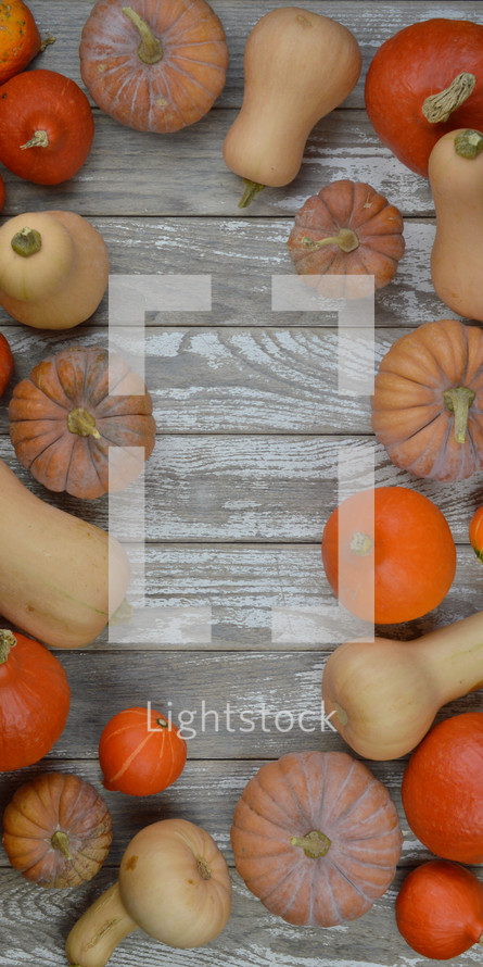 flat lay of different kinds of pumpkins and gourds on raw gray wood planks as frame with copy space in the middle
