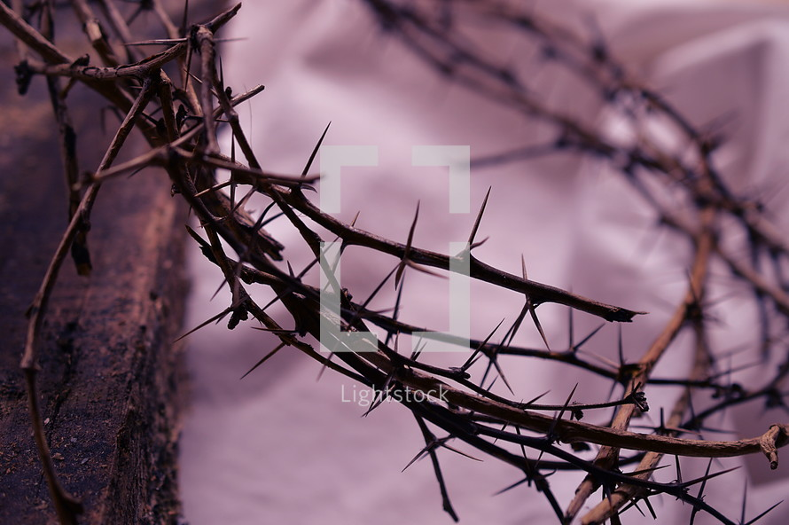 crown of thorns up close