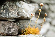 wildflowers growing in the cracks between stones