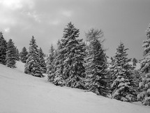 wintry mountain scene with snow covered trees.