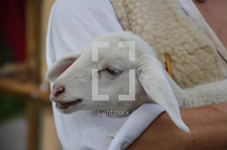 The lost sheep in the arms of the good shepherd, 