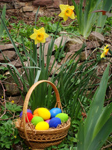 brightly colored Easter eggs in a basket and yellow daffodils outdoors