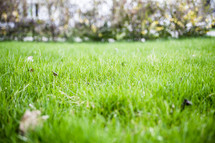 green grass in a city park