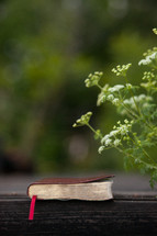 tiny white flowers and Bible