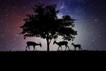 silhouettes of deer under a tree at night