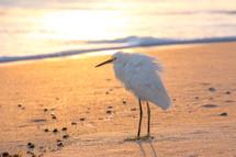 shore bird on a beach