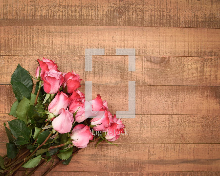 pink roses on wood background