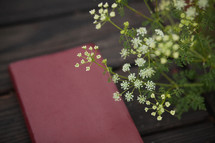 Bible on a table outdoors and tiny white flowers