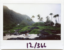 Polaroid of palm trees on a tropical island