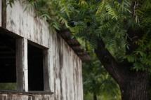 wood barn and tree