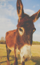 a donkey closeup