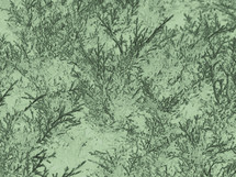 Background pattern design from needles of cedar tree.