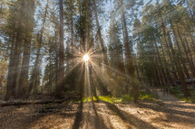 sunburst and sunlight in a forest
