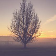 a single tree in a foggy field