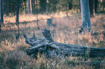 a fall tree stump in a field