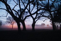 fog and trees in a park