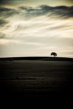 distant tree across plowed farmland