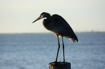 crane standing on a post in the water
