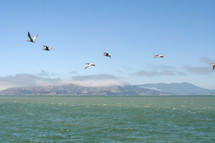 pelicans flying over water