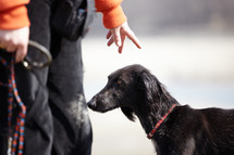 stay, dog off a leash