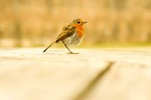 a resting songbird