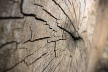 cracks in a tree stump