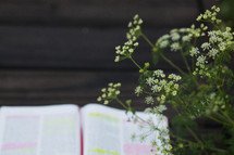 tiny white flowers and open Bible