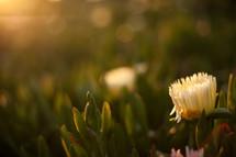 blooming flower under morning sunlight