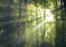 Rays of sunlight throught the trees.