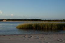 marsh grass along a shore