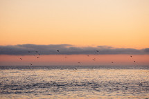 seagulls flying above the ocean