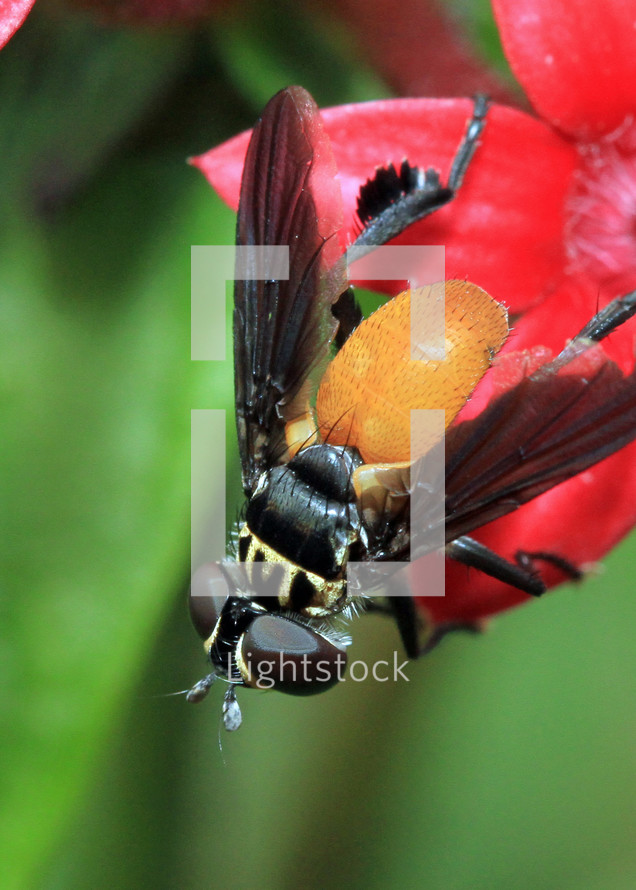 Close up of fly on a flower petal.