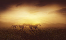 wild horses running under intense sunlight