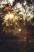 The sun rises over an Australian bush scene