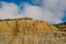 birds soaring over cliffs