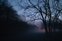 fog in a park at night
