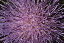 purple burst of flowers