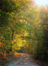rays of sunlight shining on a dirt road through a forest