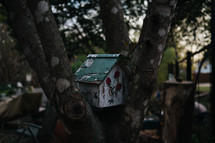 birdhouse in a tree