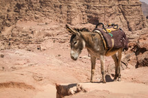 donkey with a saddle