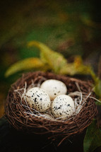 speckled eggs in a bird's nest
