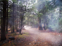 Through the mist and fog in the deep woods, a dirt road appears lead safe passage through the morning mist lined with rocks and dense forest.