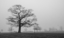 bare trees in the fog