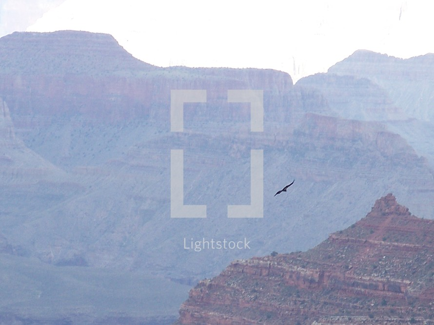 An Eagle soaring high over the cliffs of the Grand Canyon.