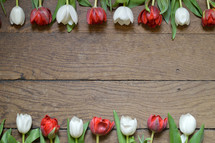 Two rows of red and white tulips on a wooden table.